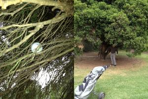 Mo up a tree